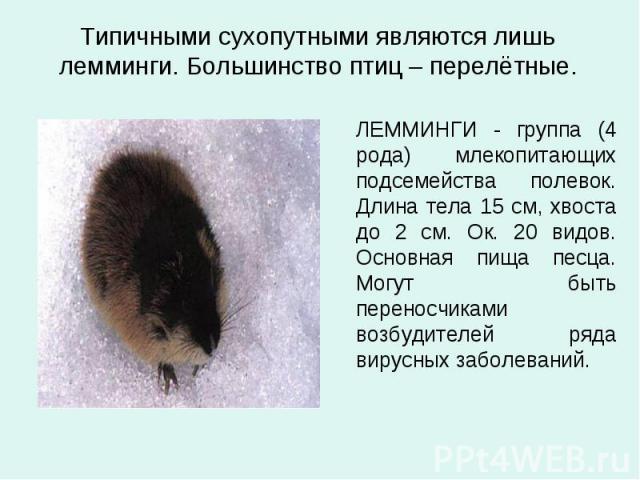Типичными сухопутными являются лишь лемминги. Большинство птиц – перелётные. ЛЕММИНГИ - группа (4 рода) млекопитающих подсемейства полевок. Длина тела 15 см, хвоста до 2 см. Ок. 20 видов. Основная пища песца. Могут быть переносчиками возбудителей ря…