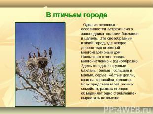 Одна из основных особенностей Астраханского заповедника- колонии бакланов и цапе