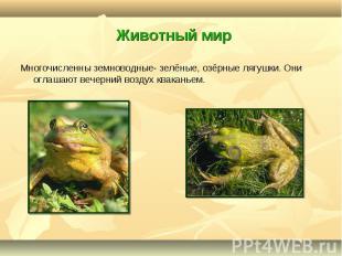 Многочисленны земноводные- зелёные, озёрные лягушки. Они оглашают вечерний возду