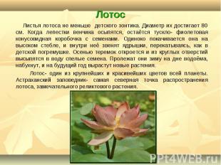 Листья лотоса не меньше детского зонтика. Диаметр их достигает 80 см. Когда лепе