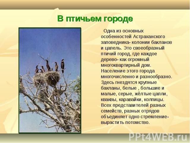 Одна из основных особенностей Астраханского заповедника- колонии бакланов и цапель. Это своеобразный птичий город, где каждое дерево- как огромный многоквартирный дом. Население этого города многочисленно и разнообразно. Здесь гнездятся крупные бакл…
