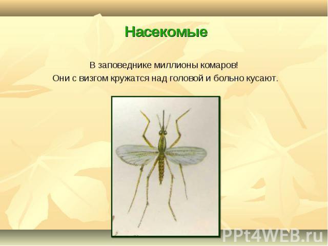 В заповеднике миллионы комаров! В заповеднике миллионы комаров! Они с визгом кружатся над головой и больно кусают.