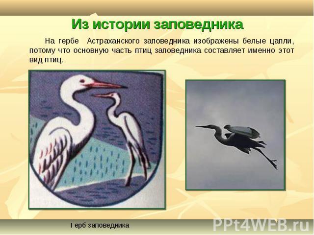 На гербе Астраханского заповедника изображены белые цапли, потому что основную часть птиц заповедника составляет именно этот вид птиц. На гербе Астраханского заповедника изображены белые цапли, потому что основную часть птиц заповедника составляет и…
