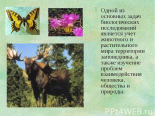 Одной из основных задач биологических исследований является учет животного и рас