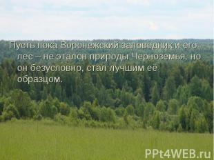 Пусть пока Воронежский заповедник и его лес – не эталон природы Черноземья, но о
