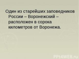 Один из старейших заповедников России – Воронежский – расположен в сорока киломе
