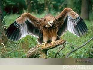 55 видов зверей и 200 видов птиц. От крошечных землероек до лосей, от королька д