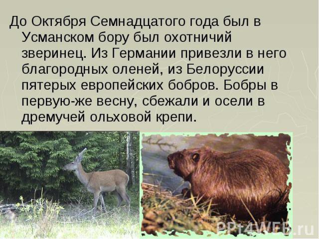 До Октября Семнадцатого года был в Усманском бору был охотничий зверинец. Из Германии привезли в него благородных оленей, из Белоруссии пятерых европейских бобров. Бобры в первую-же весну, сбежали и осели в дремучей ольховой крепи. До Октября Семнад…