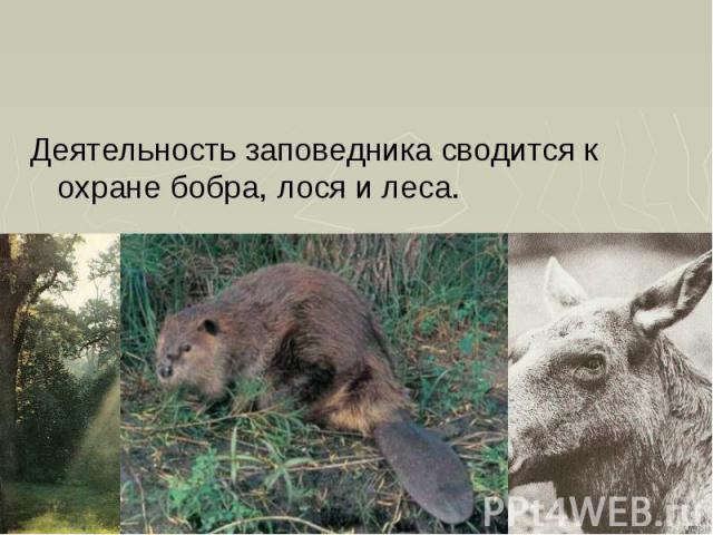Деятельность заповедника сводится к охране бобра, лося и леса. Деятельность заповедника сводится к охране бобра, лося и леса.