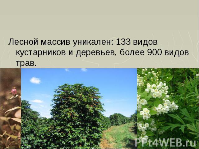 Лесной массив уникален: 133 видов кустарников и деревьев, более 900 видов трав. Лесной массив уникален: 133 видов кустарников и деревьев, более 900 видов трав.