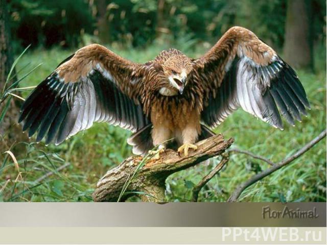 55 видов зверей и 200 видов птиц. От крошечных землероек до лосей, от королька до орла-могильщика. 55 видов зверей и 200 видов птиц. От крошечных землероек до лосей, от королька до орла-могильщика.