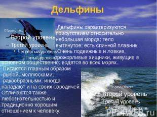 Дельфины Дельфины характеризуются присутствием относительно небольшая морда; тел