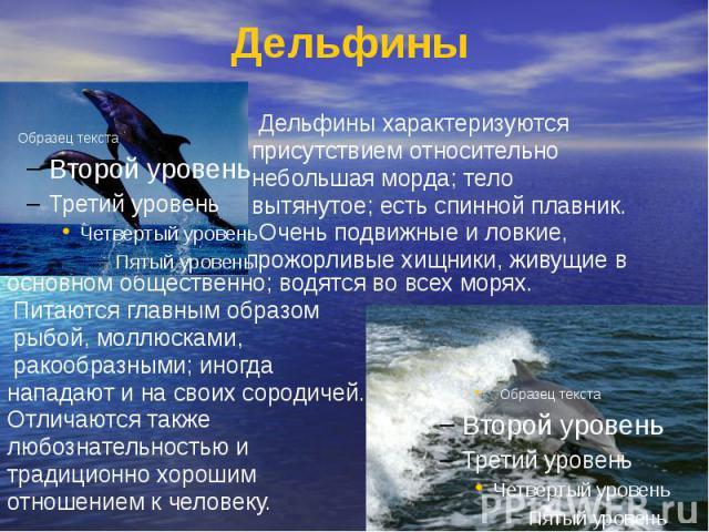 Дельфины Дельфины характеризуются присутствием относительно небольшая морда; тело вытянутое; есть спинной плавник. Очень подвижные и ловкие, прожорливые хищники, живущие в основном общественно; водятся во всех морях. Питаются главным образом рыбой, …