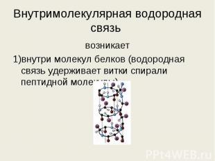 возникает возникает 1)внутри молекул белков (водородная связь удерживает витки с