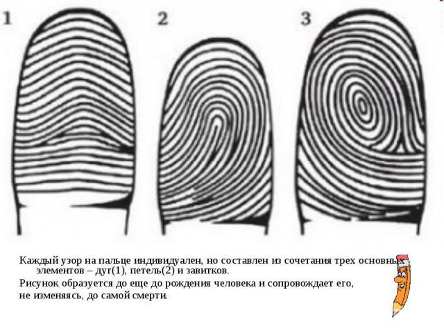 Каждый узор на пальце индивидуален, но составлен из сочетания трех основных элементов – дуг(1), петель(2) и завитков. Каждый узор на пальце индивидуален, но составлен из сочетания трех основных элементов – дуг(1), петель(2) и завитков. Рисунок образ…