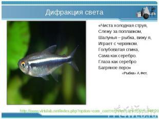 «Чиста холодная струя, «Чиста холодная струя, Слежу за поплавком, Шалунья – рыбк