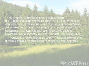 Лес играет важнейшую роль в нормальном функционировании природных экосистем. Они