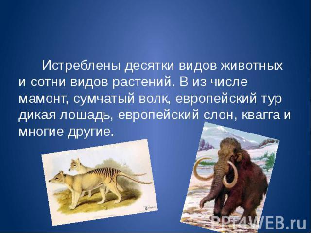 Истреблены десятки видов животных и сотни видов растений. В из числе мамонт, сумчатый волк, европейский тур дикая лошадь, европейский слон, квагга и многие другие. Истреблены десятки видов животных и сотни видов растений. В из числе мамонт, сумчатый…