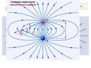 Силовые линии электрических полей Силовые линии кулоновских полей