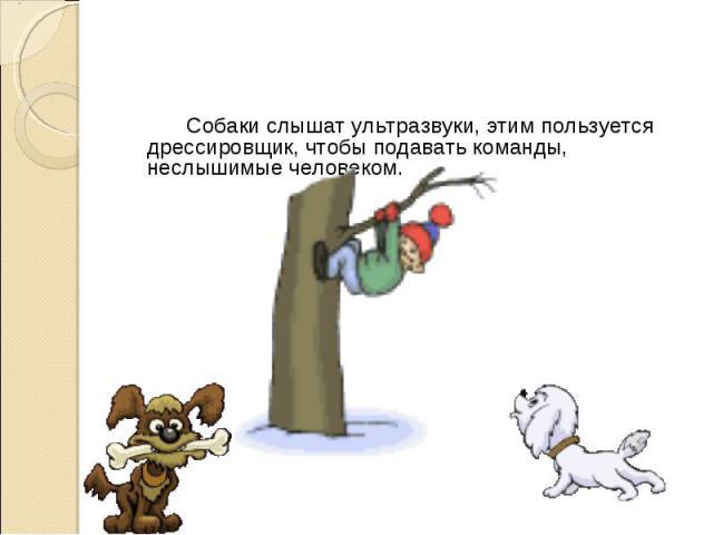 Собаки слышат ультразвуки, этим пользуется дрессировщик, чтобы подавать команды, неслышимые человеком. Собаки слышат ультразвуки, этим пользуется дрессировщик, чтобы подавать команды, неслышимые человеком.