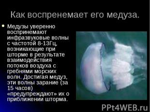 Медузы уверенно воспринемают инфразвуковые волны с частотой 8-13Гц, возникающие