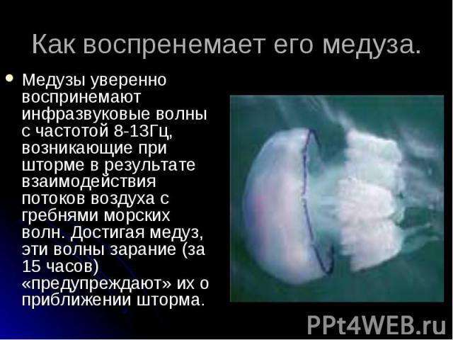 Медузы уверенно воспринемают инфразвуковые волны с частотой 8-13Гц, возникающие при шторме в результате взаимодействия потоков воздуха с гребнями морских волн. Достигая медуз, эти волны зарание (за 15 часов) «предупреждают» их о приближении шторма. …