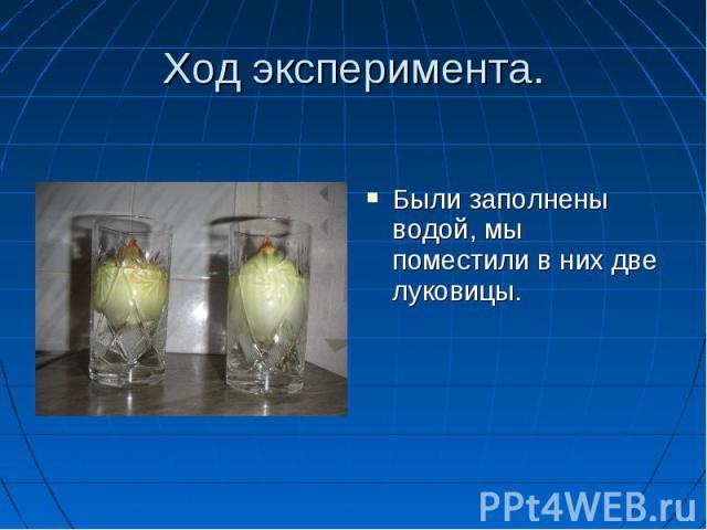 Были заполнены водой, мы поместили в них две луковицы. Были заполнены водой, мы поместили в них две луковицы.