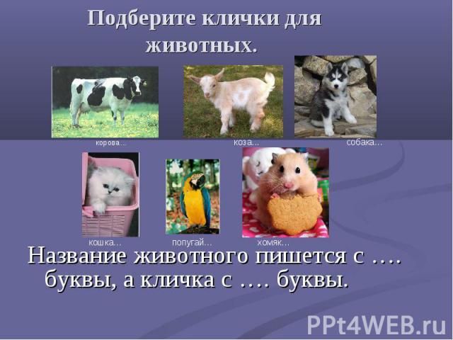 Название животного пишется с …. буквы, а кличка с …. буквы. Название животного пишется с …. буквы, а кличка с …. буквы.