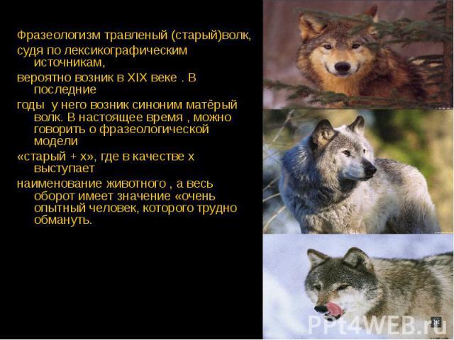Фразеологизм травленый (старый)волк, Фразеологизм травленый (старый)волк, судя по лексикографическим источникам, вероятно возник в XIX веке . В последние годы у него возник синоним матёрый волк. В настоящее время , можно говорить о фразеологической …