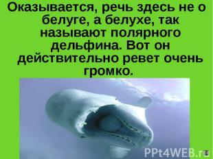 Оказывается, речь здесь не о белуге, а белухе, так называют полярного дельфина.