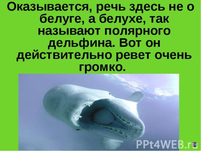 Оказывается, речь здесь не о белуге, а белухе, так называют полярного дельфина. Вот он действительно ревет очень громко.