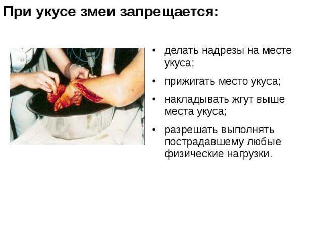 делать надрезы на месте укуса; делать надрезы на месте укуса; прижигать место укуса; накладывать жгут выше места укуса; разрешать выполнять пострадавшему любые физические нагрузки.
