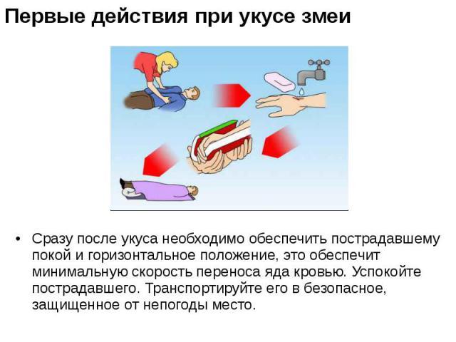 Сразу после укуса необходимо обеспечить пострадавшему покой и горизонтальное положение, это обеспечит минимальную скорость переноса яда кровью. Успокойте пострадавшего. Транспортируйте его в безопасное, защищенное от непогоды место. Сразу после укус…