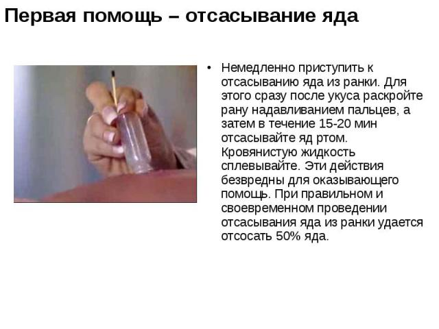 Немедленно приступить к отсасыванию яда из ранки. Для этого сразу после укуса раскройте рану нaдaвливанием пальцев, а затем в течение 15-20 мин отсасывайте яд ртом. Кровянистую жидкость сплевывайте. Эти действия безвредны для оказывающего помощь. Пр…