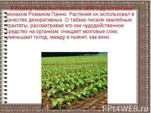 В Европу табак был завезён в 1496 году испанским монахом Романом Панно. Растения