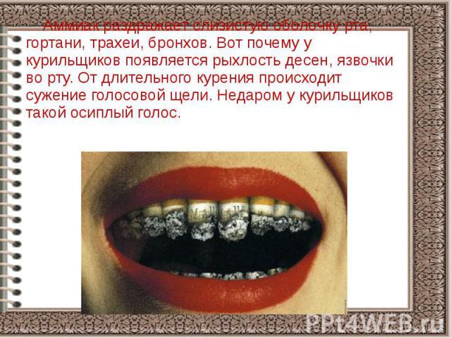 Аммиак раздражает слизистую оболочку рта, гортани, трахеи, бронхов. Вот почему у курильщиков появляется рыхлость десен, язвочки во рту. От длительного курения происходит сужение голосовой щели. Недаром у курильщиков такой осиплый голос. Аммиак раздр…