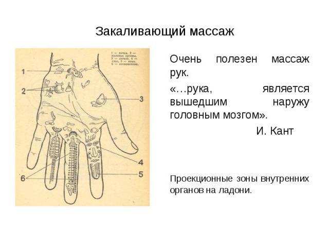 Очень полезен массаж рук. Очень полезен массаж рук. «…рука, является вышедшим наружу головным мозгом». И. Кант Проекционные зоны внутренних органов на ладони.