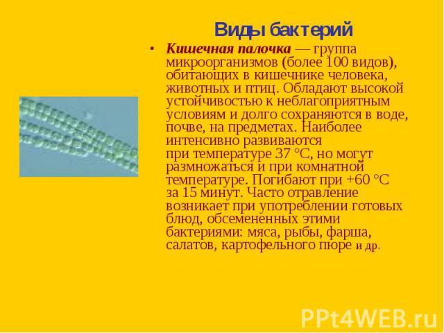 Виды бактерий Виды бактерий Кишечная палочка— группа микроорганизмов (более 100видов), обитающих вкишечнике человека, животных иптиц. Обладают высокой устойчивостью кнеблагоприятным условиям идолго сохраняются в&n…