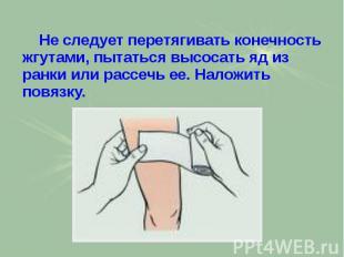 Не следует перетягивать конечность жгутами, пытаться высосать яд из ранки или ра