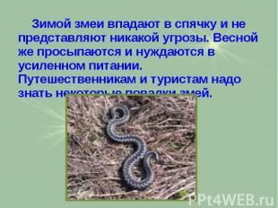Зимой змеи впадают в спячку и не представляют никакой угрозы. Весной же просыпаю