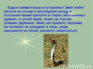 Будьте внимательны и осторожны! Змеи любят греться на солнце в прохладную погоду