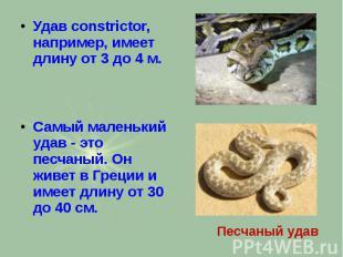 Удав constrictor, например, имеет длину от 3 до 4 м. Удав constrictor, например,
