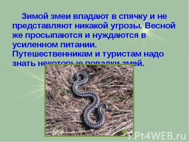 Зимой змеи впадают в спячку и не представляют никакой угрозы. Весной же просыпаются и нуждаются в усиленном питании. Путешественникам и туристам надо знать некоторые повадки змей. Зимой змеи впадают в спячку и не представляют никакой угрозы. Весной …