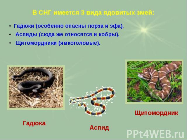 В СНГ имеется 3 вида ядовитых змей: Гадюки (особенно опасны гюрза и эфа). Аспиды (сюда же относятся и кобры). Щитомордники (ямкоголовые).