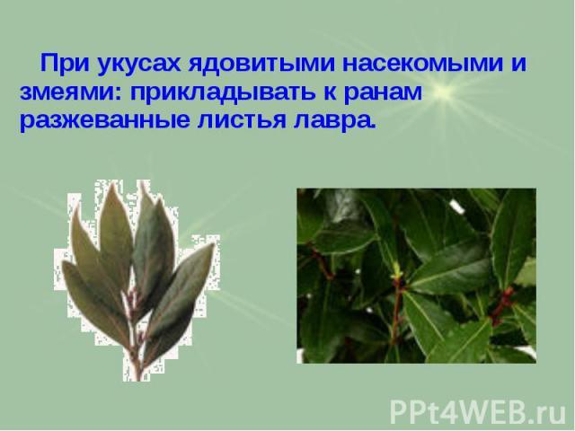 При укусах ядовитыми насекомыми и змеями: прикладывать к ранам разжеванные листья лавра. При укусах ядовитыми насекомыми и змеями: прикладывать к ранам разжеванные листья лавра.