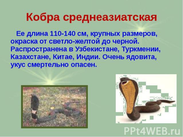 Кобра среднеазиатская Ее длина 110-140 см, крупных размеров, окраска от светло-желтой до черной. Распространена в Узбекистане, Туркмении, Казахстане, Китае, Индии. Очень ядовита, укус смертельно опасен.