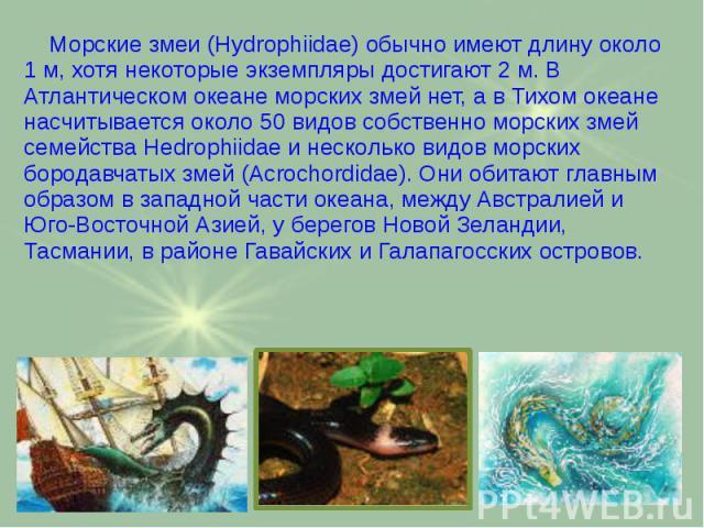 Морские змеи (Hydrophiidae) обычно имеют длину около 1 м, хотя некоторые экземпляры достигают 2 м. В Атлантическом океане морских змей нет, а в Тихом океане насчитывается около 50 видов собственно морских змей семейства Hedrophiidae и несколько видо…