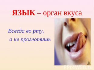ЯЗЫК – орган вкуса Всегда во рту, а не проглотишь