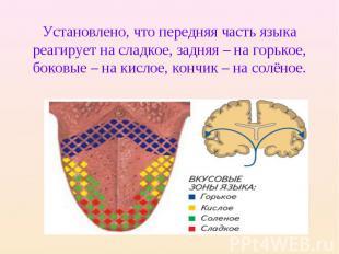 Установлено, что передняя часть языка реагирует на сладкое, задняя – на горькое,