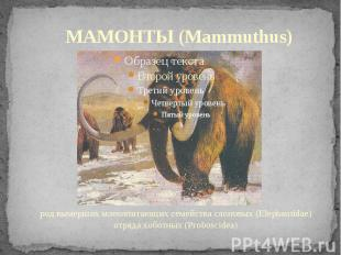 МАМОНТЫ (Mammuthus) род вымерших млекопитающих семейства слоновых (Elephantidae)